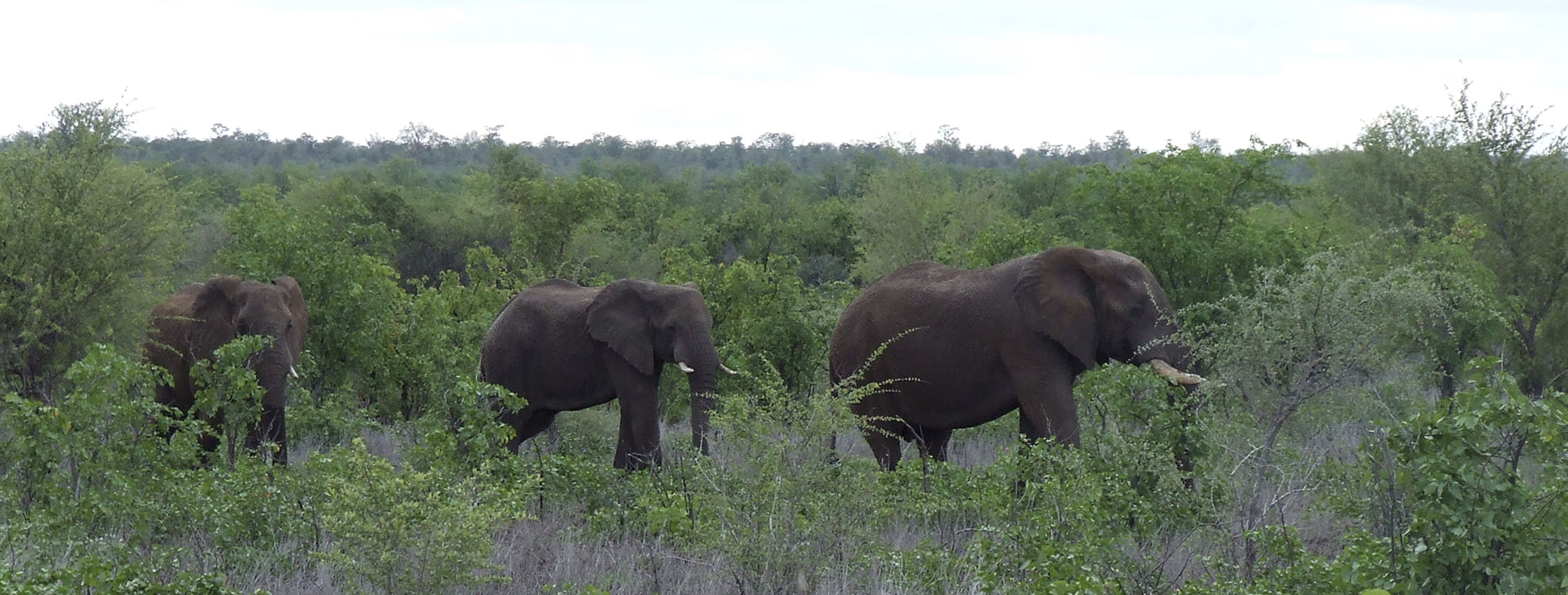 Elephants belong in South Africa's Kruger National Park. They attract tourists and create important economic advantages